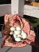 Schlangen_eggs-from-Susan1_kellythekitchenkop