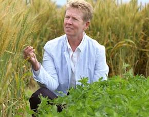 GMO-wheat_Carol_Mallory-Smith--FacultyBio