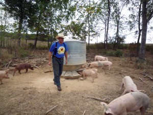 Joel_Salatin_and_pastured_pigs-300x225
