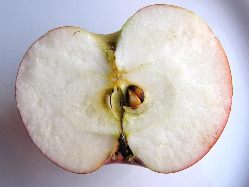 GMO-apple--Muffet-via-Compfight-cc
